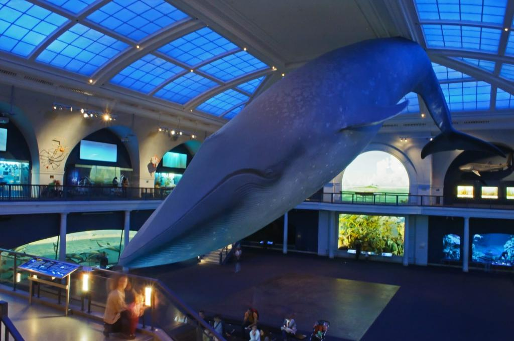 American Museum of Natural History Foto: InSapphoWeTrust/ Flickr CC