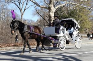 Central Park fotos