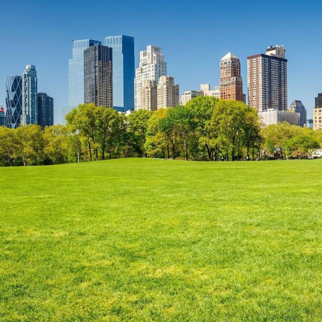 Verão no Central Park