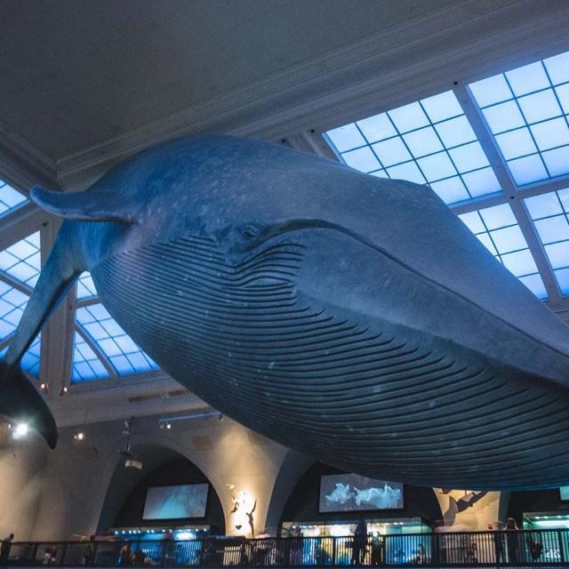 Museus em Nova York de graça