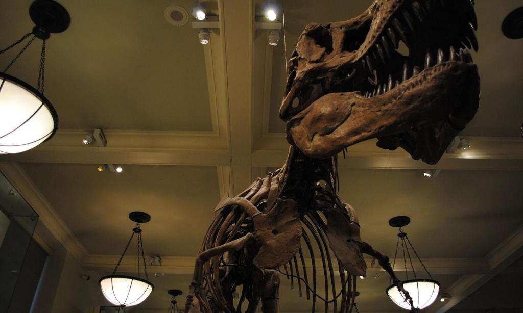 melhores museus em nova york  American museum of Natural History